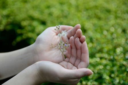Girl hands holding little purple flower in green background