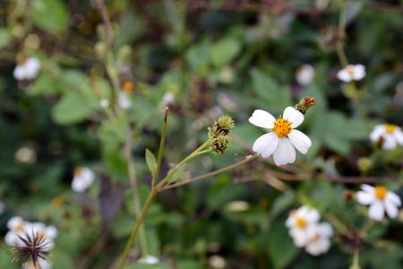 Yellow white little flower in summer background