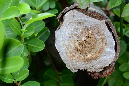 Tree trunk in cross section Reklamní fotografie