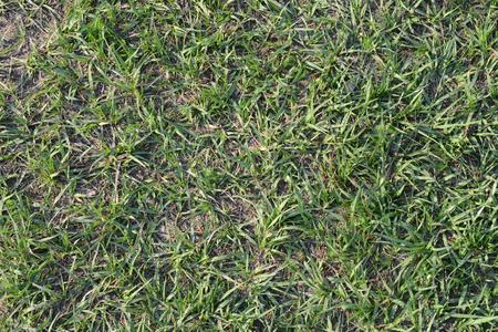 Grass top view Reklamní fotografie
