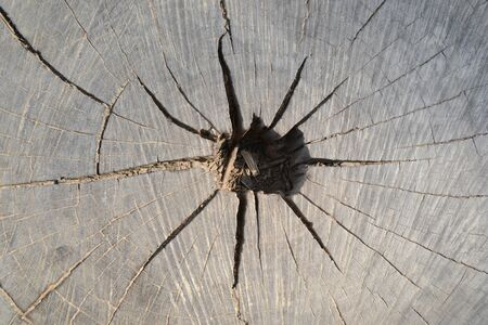 Tree trunk in cross section, top-view, macro