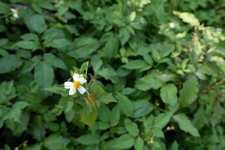 Little white flower on leaves Reklamní fotografie