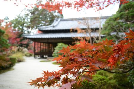 Red leaves in Japan garden Reklamní fotografie