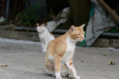 A street cat on street