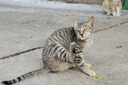 A street cat scratching itself on street Reklamní fotografie