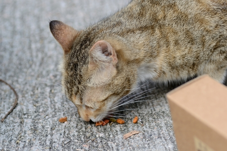 A street cat eating on street