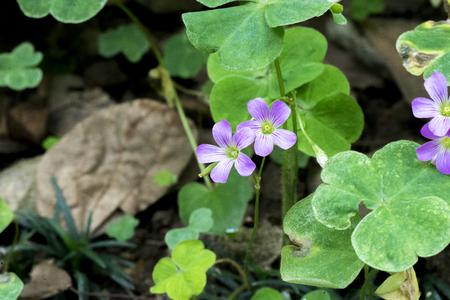purple little flower on road