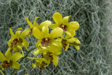 Yellow orchid on green background Reklamní fotografie