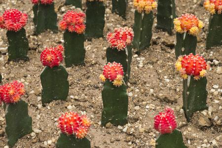 Cactus in pattern
