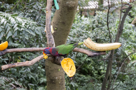 Parrot eat fruit in country park