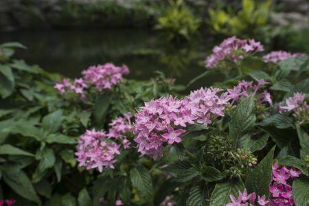 little pink flower blossom on branch in park