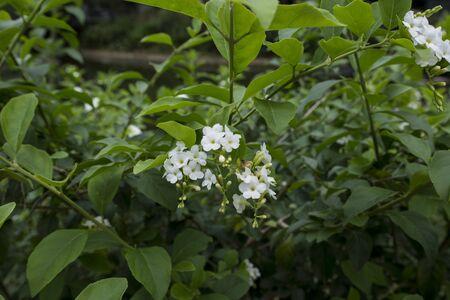 little white flower blossom on branch in park Reklamní fotografie
