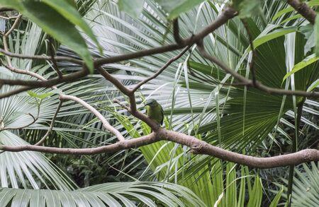 Green bird standing on branch tree
