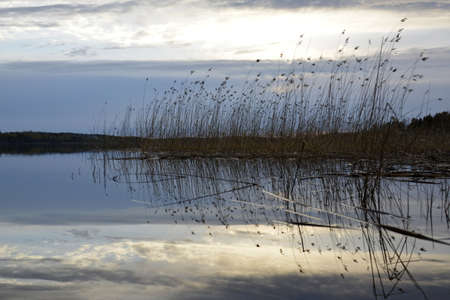Mirror water surface reflecting sunlit clouds. Dry grass standing in the lake, dark forest in the background.