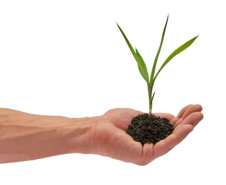 Young plant which is in a man's hand Stock Photo - 14285665