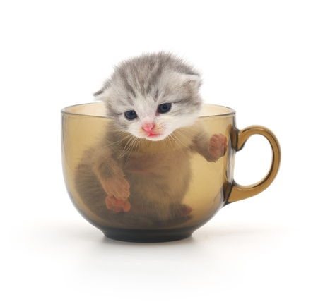 cute kitten in glass cup photo