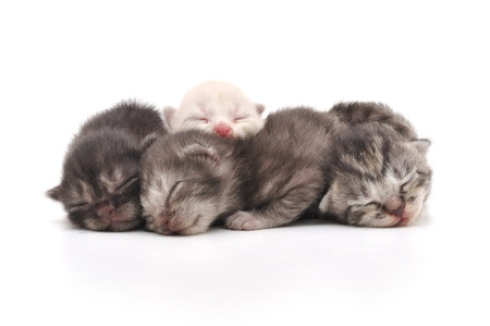 Lovely kittens sleeping together in isolated white background Imagens