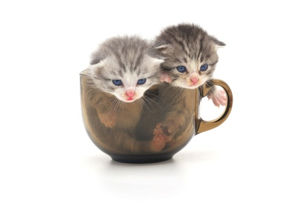 cute kittens in glass cup
