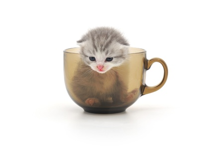 cute kittens in glass cup photo
