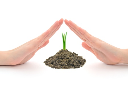 Human hands sheltering a young plant (snowdrop), studio shot Stock Photo