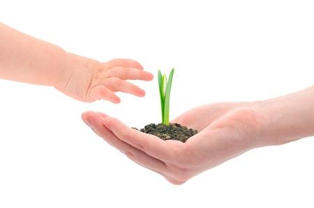 젊은 다음 세대 이상 손 나눠 새싹의 개념 이미지. 스톡 콘텐츠