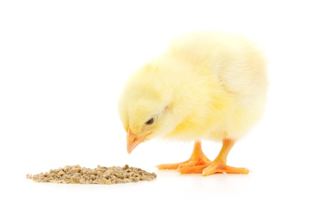 animal feed: chicken with food on a white background.