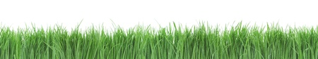 Seamless green grass panorama isolated on white background  photo