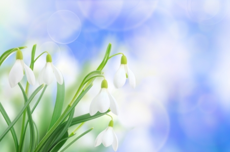 Spring snowdrop flowers (Galanthus nivalis) on sky background Imagens