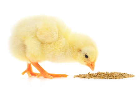 흰색 배경에 음식 닭. 스톡 콘텐츠