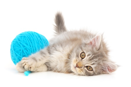 cats playing: Small funny kitten and clew of thread . Isolated on white background