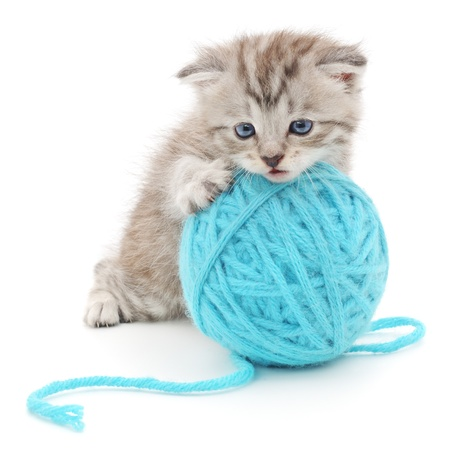 CAT TOY: Small funny kitten and clew of thread . Isolated on white background