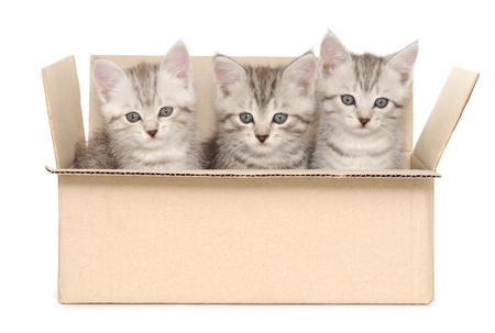 Three small kittens in a cardboard box 免版税图像