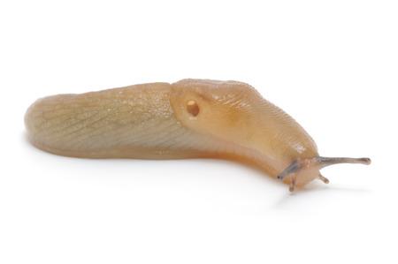 slug: Slug - the slowest animal.