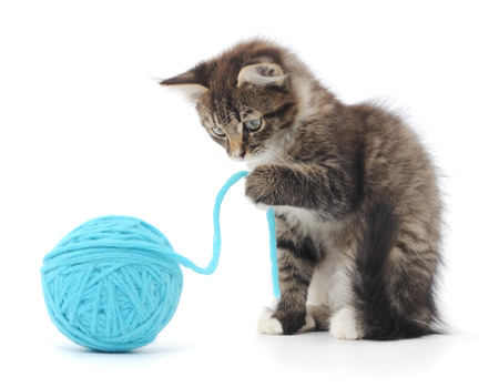 Small funny kitten and clew of thread . photo