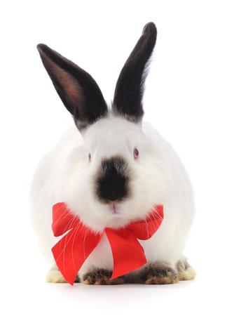 lapin blanc: Vecteur d'image d'un lapin blanc avec un arc rouge.