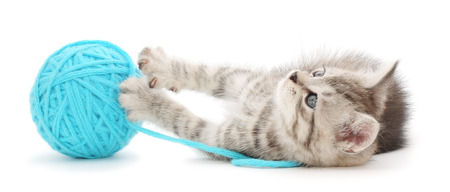 Small funny kitten and clew of thread photo