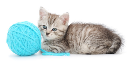 Small funny kitten and clew of thread . Isolated on white background photo