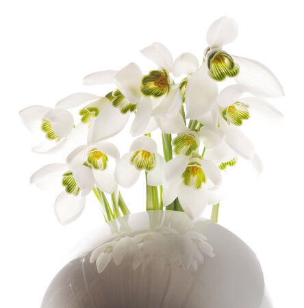 Spring snowdrop flowers bouquet in cup isolated on white photo