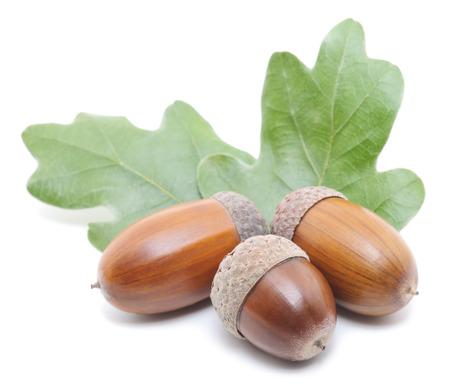 macro of three brown acorns with oak leaf Imagens - 27145928