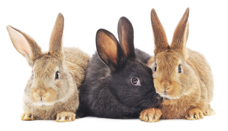 Isolated image of a three bunny rabbits. Imagens