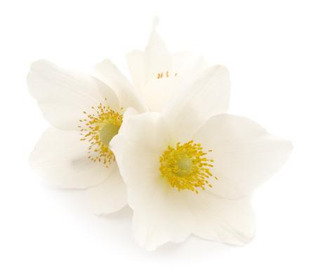 Three white flowers on a white background  Zdjęcie Seryjne