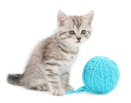 Small funny kitten and clew of thread . Isolated on white  photo