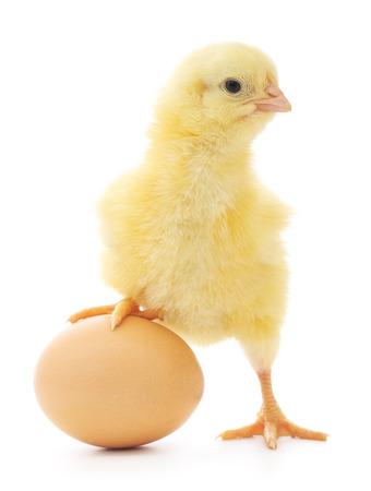 braunes Ei und Huhn auf einem weißen Hintergrund Standard-Bild