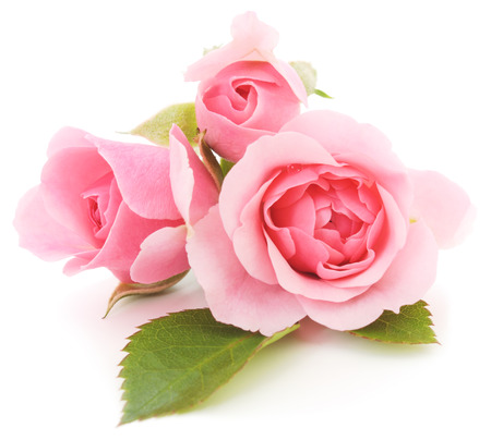 Three beautiful pink roses on a white background  Фото со стока