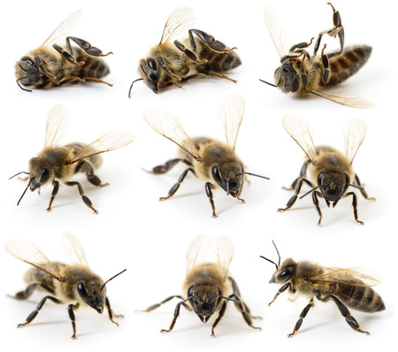 Set of bees on a white background Imagens