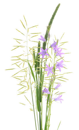 bluebell: Summer bouquet with bluebell isolated on white