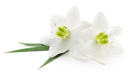 to white: Two white flowers on a white background Stock Photo