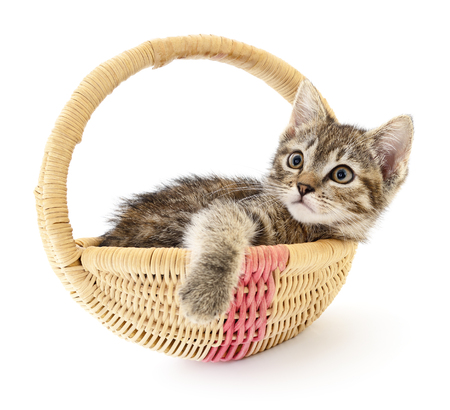 small basket: One small grey kitten sitting in a basket
