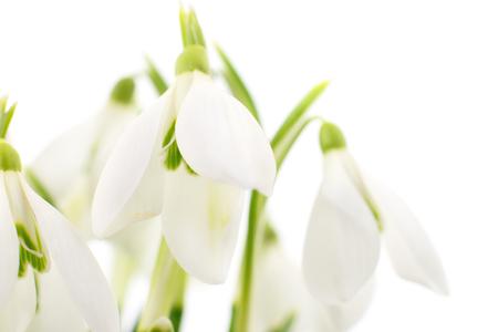 Frühlingsschneeglöckchen blüht den Blumenstrauß, der auf Weiß lokalisiert wird Standard-Bild - 74278440