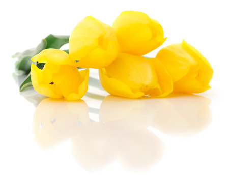 Five beautiful yellow tulips isolated on white background